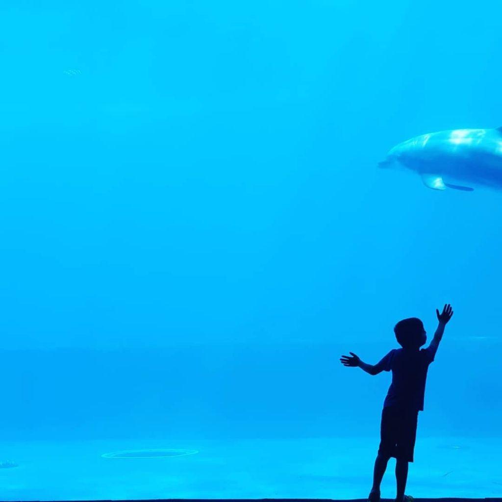 acquario di Genova bambino