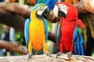 La foresta di pappagalli